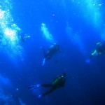 I went diving with the Oregonians